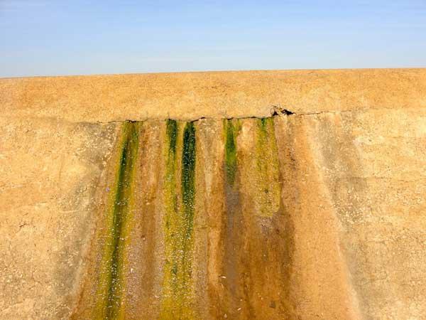 Cement Crack Algae